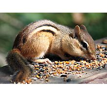 Chippy Snack Photographic Print