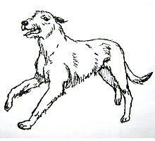 Irish Wolfhound Photographic Print