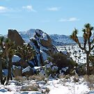 Snowflakes at Joshua Tree by harborhouse55