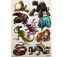 Reptiles & Amphibians Photographic Print