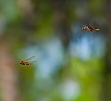 Dragonflies by Michael Wolf