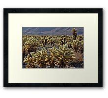 Cholla cacti- Joshua Tree NP Framed Print