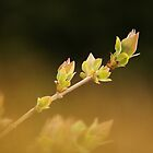 Tender Shoots by Tracy Friesen