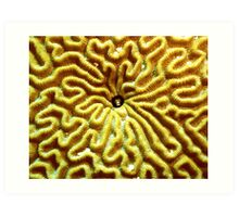 Gobi in Brain Coral Art Print