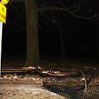 Orbs Near Knocked Down Fence by impala01gurl