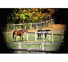 Brown and black Horse In Field Photographic Print