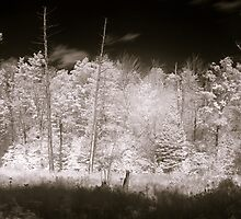 An Infra-red Autumn in Gatineau Park by Max Buchheit