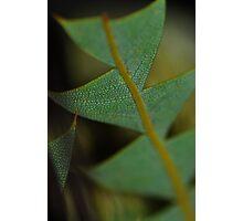 Reptile Plant Photographic Print