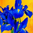 Iris In The Morning Sun by Diane Schuster
