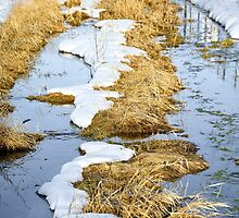 Cherry Creek Snow Melt  by Robert Meyers-Lussier