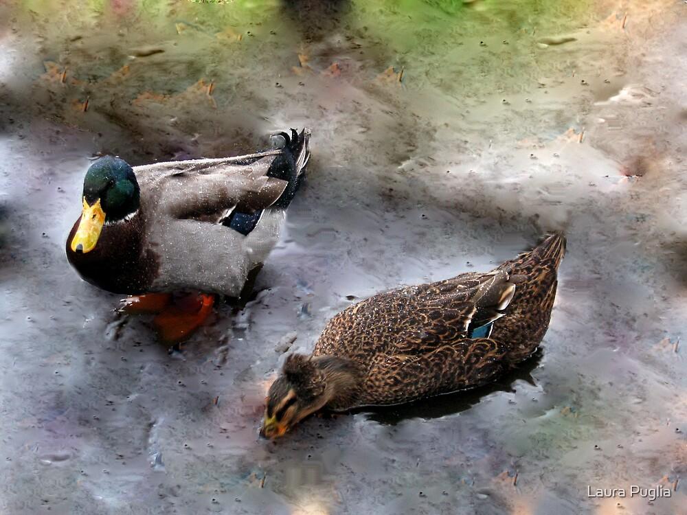 Ducks on Ice (III) by Laura Puglia