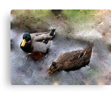 Ducks on Ice (III) Canvas Print