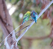 Budgie Buddies by Geoffrey