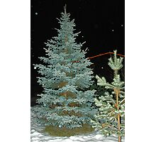 Looking for X-Mas Tree Photographic Print