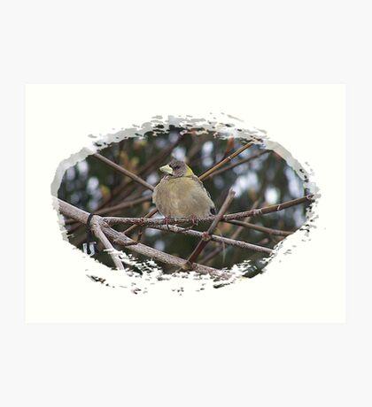 Bird In The Tree Art Print