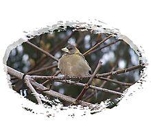 Bird In The Tree Photographic Print