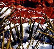 Snow and Yucca, Red Rock Canyon by Benjamin Padgett