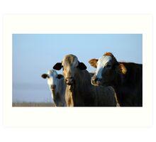 Confident Cows Art Print