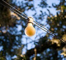 Bug Light by RollemFloyd