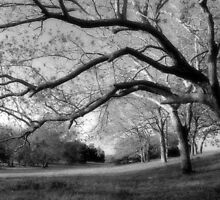 Pecan Orchard by RollemFloyd