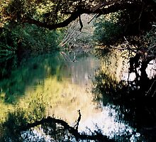 The River Duck by Vivi Kalomiri