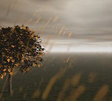 Country Rain by dmark3