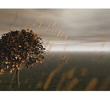 Country Rain Photographic Print
