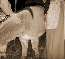Me Petting the Donkey While little girl wonders... by WaleskaL