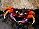 Halloween Crab by Johnny Furlotte