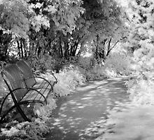 Dream Bench 2 by olga zamora