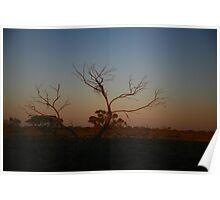 Desert Tree in Pastels Poster