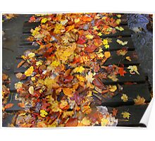 Wet leaves on footbridge Poster