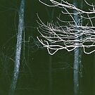 trees at night by bonniedawn