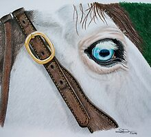 """Friendly Wizard"" - Color Pencil by SD 2010 Photography & Equine Art Creations"