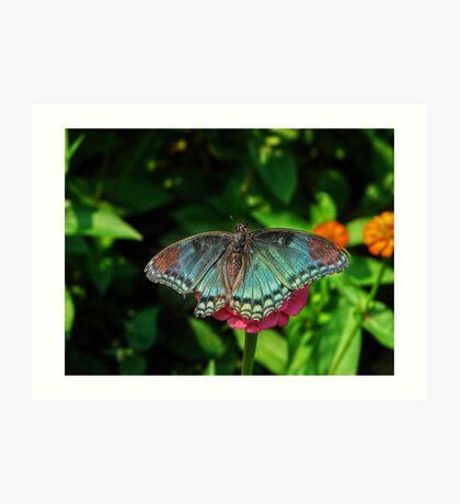 Battle Scarred Butterfly Art Print