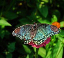 Battle Scarred Butterfly by Ron Alcorn