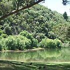 Nice piece of lake by David Hill