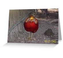 a golden crested partridge Greeting Card