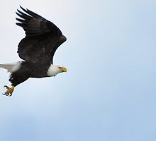Talking with Eagles by Franklin Lindsey