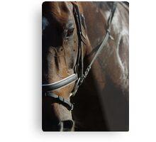 horse fly Metal Print