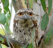 Watching you, very closely by stevealder