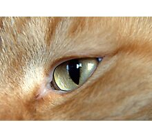 Eye of the Cat Photographic Print