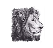The King Lion Photographic Print
