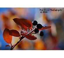 Fall Berry Bokeh Photographic Print
