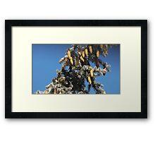 Blue Skies 001 Framed Print