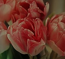 Pink Tulips by walstraasart