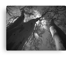 Scary Trees- Moores Road Canvas Print
