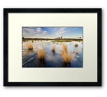 Scrub Marsh Framed Print