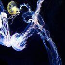 Jellyfish Fields by schizomania