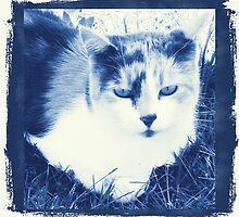 cyanotype kk by ashroc